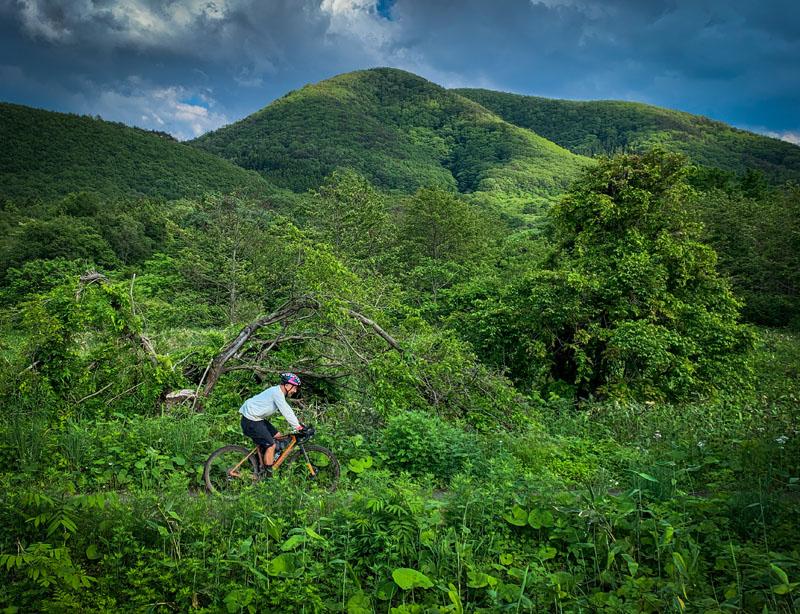 東北の爽やかな緑の中を進む自転車